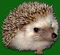 Steelhedgehog's picture